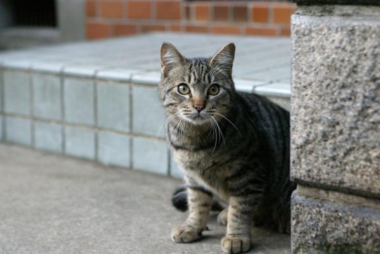 intel-cat-2